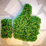 detersivo ecologico